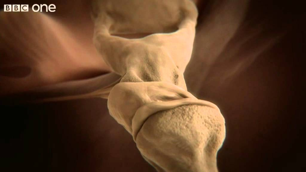 How your ear works - Inside the Human Body: Building Your ...
