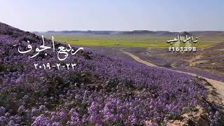 ربيع تاريخي في منطقة الجوف شمال السعوديه.. تصويري بتاريخ 23-2-2019