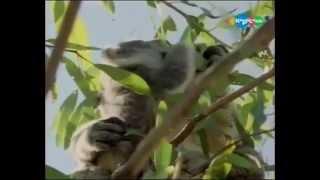 Забавные животные - Питание - Кто что ест в животном мире