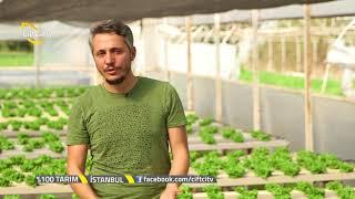 % 100 Tarım - Su Kültüründe Kıvırcık Marulun Yetiştirilmesi.