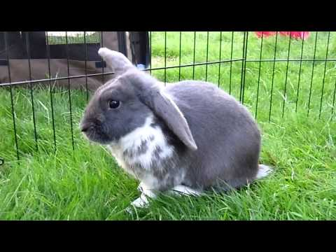 Fairly Beloved Rabbit Care - Kyle