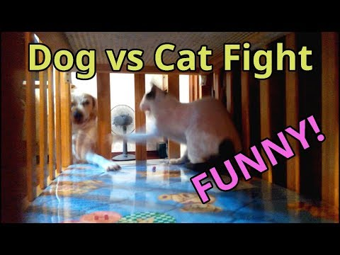Dog vs Cat Fight - Funny Fight Battle Guess Who Wins