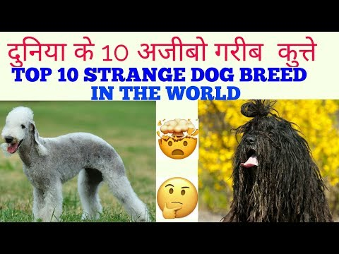 top 10 strange dog breed in the world | strange dog breeds in the world