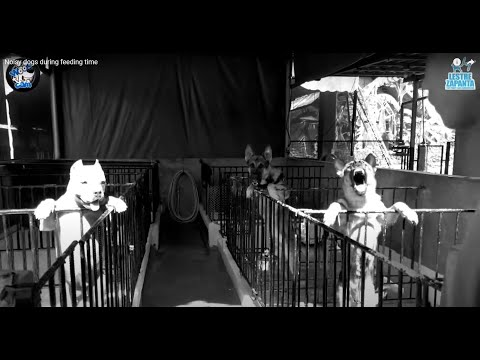 Noisy dogs during feeding time