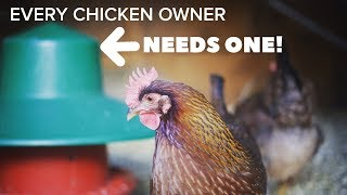 BACKYARD CHICKENS - 5 THINGS YOU MIGHT NOT HAVE BUT SHOULD (They will make your life easier)