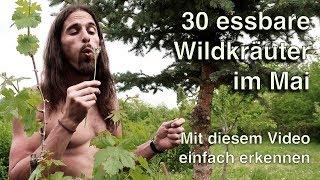 30 Wildkräuter im Mai!