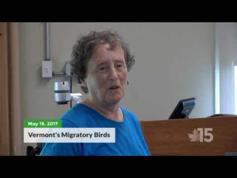 Migratory Bird Talk
