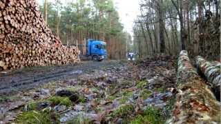 Mit über 1000 PS ab in Wald ;-)