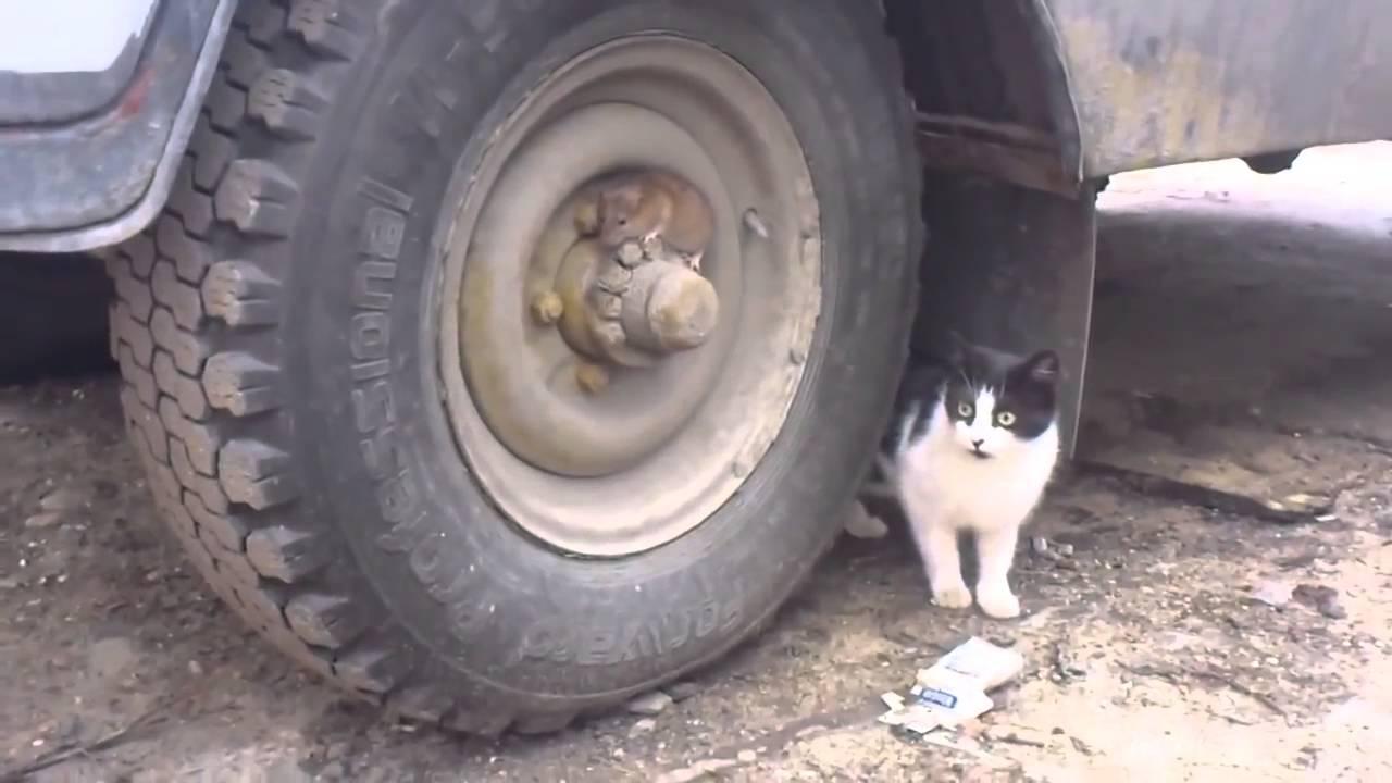 Kot Szuka Youtube