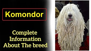 Komondor aka the Hungarian sheepdog  Pros and Cons, Price, How to choose, Facts, Care, History