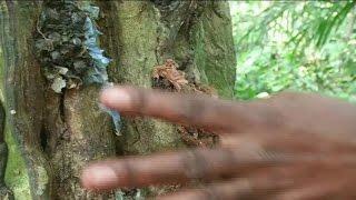 Gabon, Un rite incantatoire, mystico - spirituel