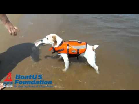 Medium Dog Life Jacket