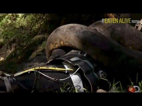 คลิปอนาคอนด้ากินคน จากรายการ Eaten Alive ของ Discovery Channel (FULL) (Sub Thai)
