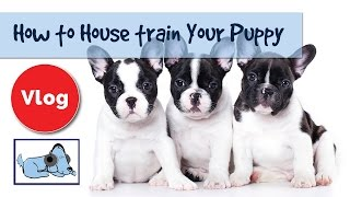 How to House Train Your Puppy, Top Tips for Potty Training Dogs 🐶 #TRAINVLOG01