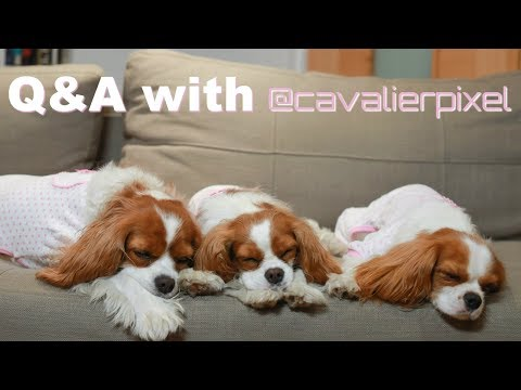 Q&A with Cavalier Pixel | Silly Habits, Dream Businesses and Ghosts?! CAV MOM TALKS