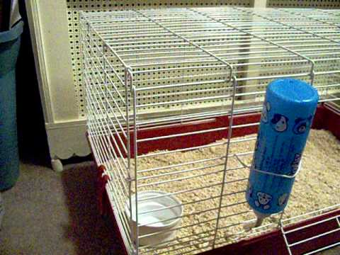 Setting up a guinea pig cage 2 youtube for How to guinea pig cage