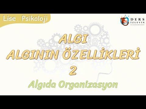 ALGININ ÖZELLİKLERİ - 2 / ALGIDA ORGANİZASYON