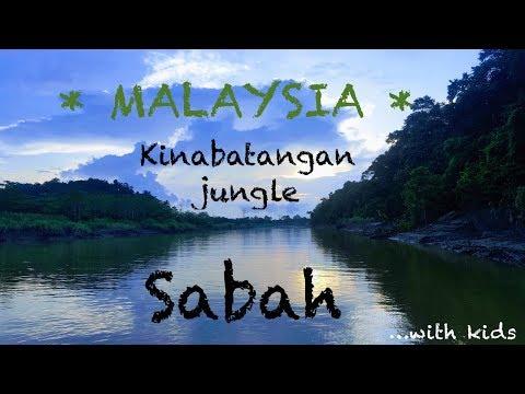 Sabah Kinabatangan River  | Malaysia 2017 | Travel Vlog