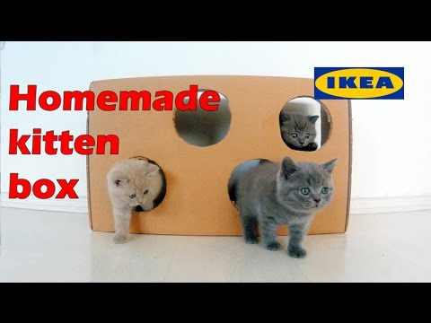 Cardboard cat box - How to make a kittens playground IKEA box 4K