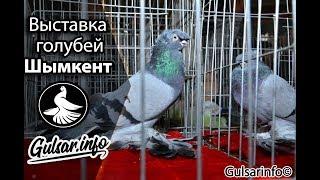 ВЫСТАВКА ГОЛУБЕИ Г.ШЫМКЕНТ 2018 PIGEONS / TAUBE #Gulsarino