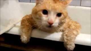 Пичалька: Кот Тима прыгает в ванной