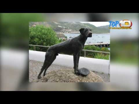 top-10-animals-with-awesome-military-careers-(video-hd-2014)