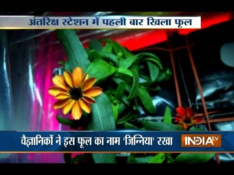 First Flower Blooms in Space Aboard the International Space Station