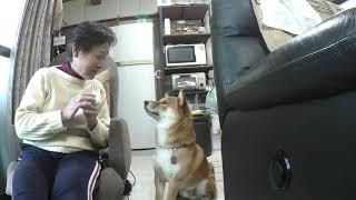 我家の愛犬「キン」は、郷土の歌手、三山ひろしさんを応援しています。