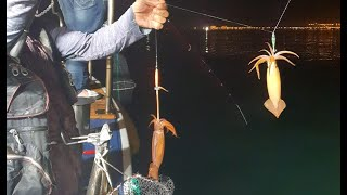 마루호 왕화살촉오징어 …