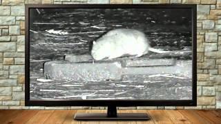 rats photon 5