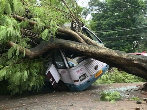 Tree fallen to bus parked at Peroorkada KSRTC bus stand