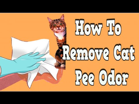 How To Remove Cat Pee Odor Remove Cat Urine Odor From