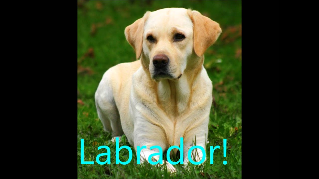 i 10 cani cani più belli del mondo! :) - youtube