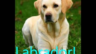 I 10 cani cani più belli del mondo! :)