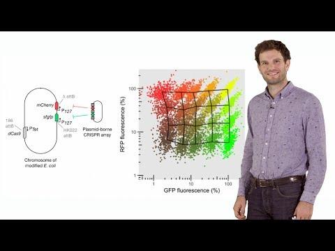 Synthetic Biology: Engineering bacteria with CRISPR - David Bikard