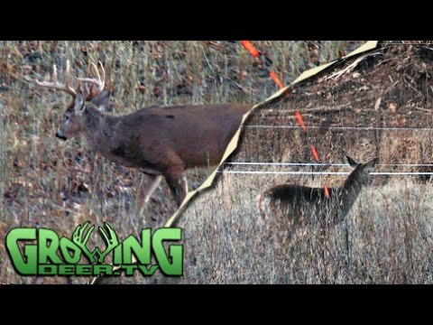 Deer Hunting With The Kids And Trapping Coyotes (#270) @GrowingDeer.tv