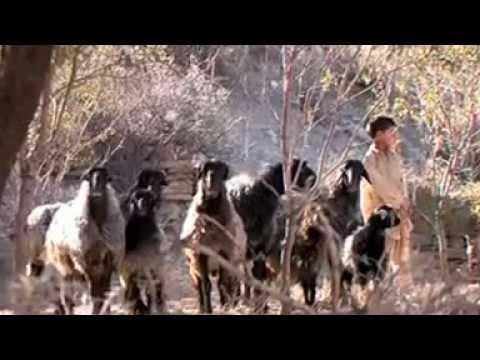 The Suleiman Markhor Of The Torghar Mountains - A Dream Deferred . Jogezai - Qila Saifullah Pakistan