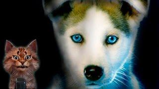 Наука для детей Животные | Собака | Семен Ученый