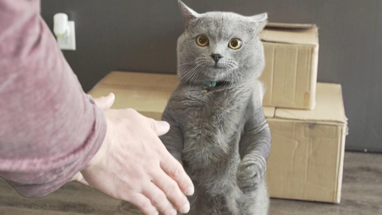 Best Friends Handshake - Aaron's Animals - Best Friends Handshake - Aaron's Animals