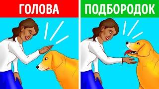 Как правильно и безопасно подойти к собаке