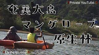 mangrove canoe tour JAPAN La Vie en rose's Private YouTube 2018...