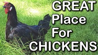 Creating a Great Environment for Chickens & Other Poultry Such as Ducks