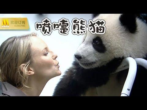 """【1080P Full Movie】《喷嚏熊猫》一部萌气十足的动物""""真猫秀""""(安泊克丽)"""