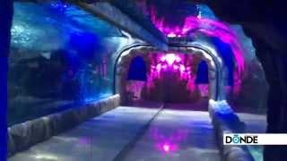 Aquarium Inbursa - Dónde Ir
