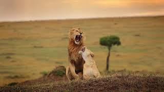 kenya wildlife masai mara photography trip HD