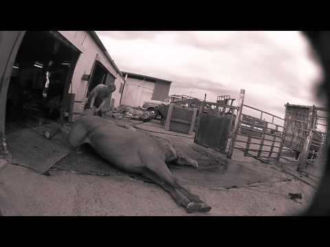 WATCH WATCH! Lets save the horses!