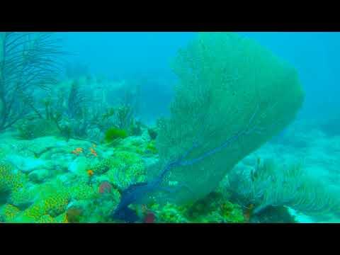 Molasses Reef Key Largo