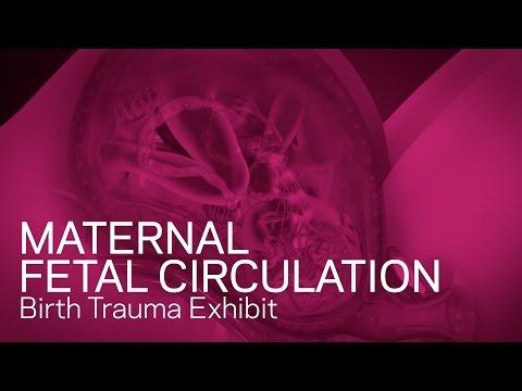 maternal-fetal-circulation---birth-trauma-animation