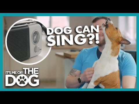 This Dog Loves To Sing | Britain's Favourite Dogs
