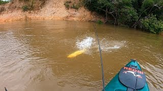 TENTE NÃO QUERER PESCAR ESSE PEIXE!!! Pescaria e fritada na beira do rio.
